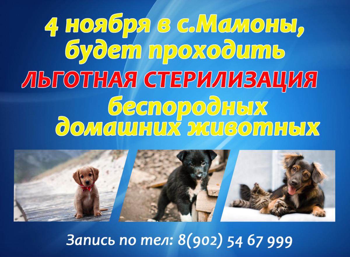 4 ноября в с. Мамоны, будет проходить льготная стерилизация беспородных домашних животных запись по телефону.