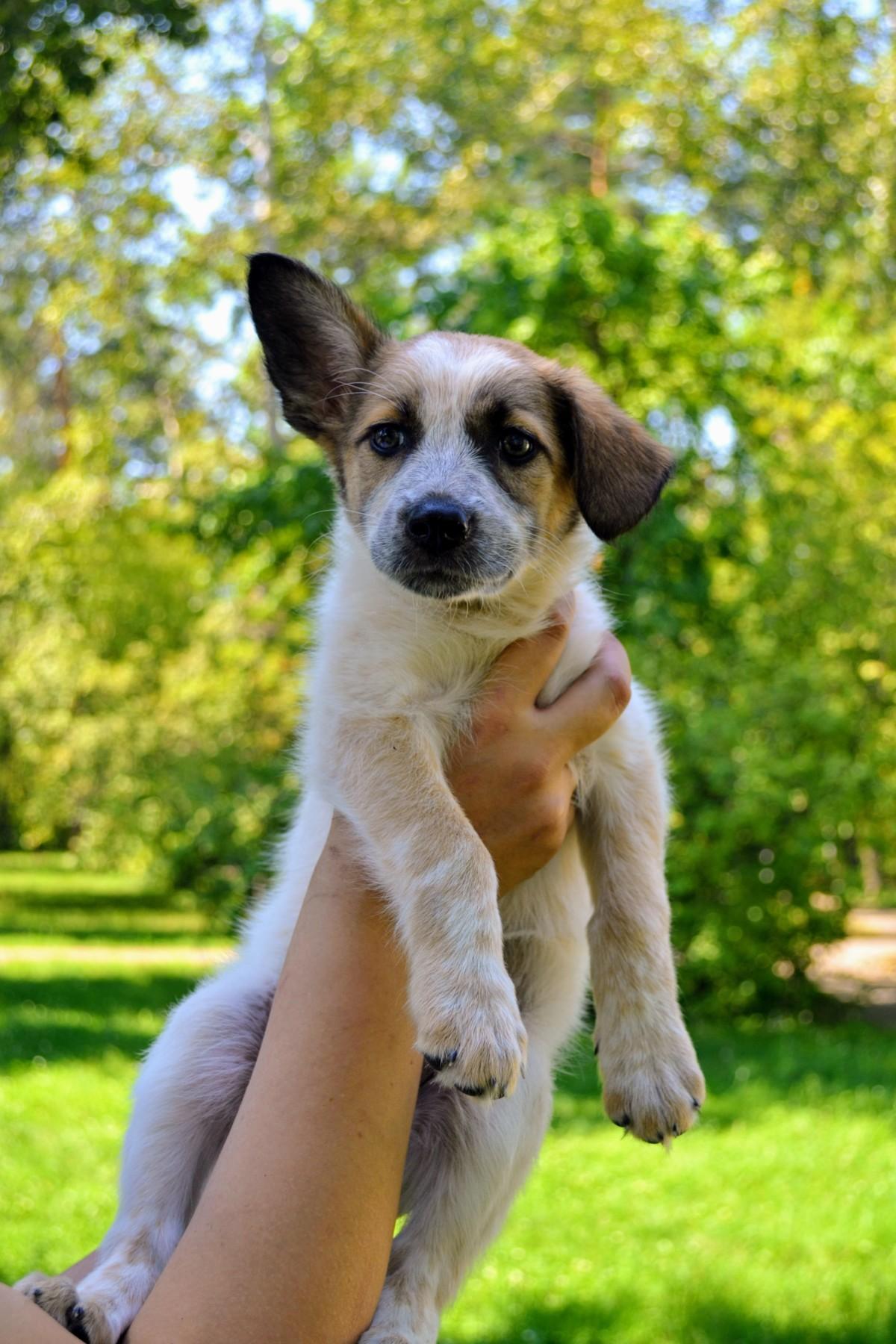 Взять собаку из приюта по кличке  Люся - г. Ангарск 3f2bbb94001bb