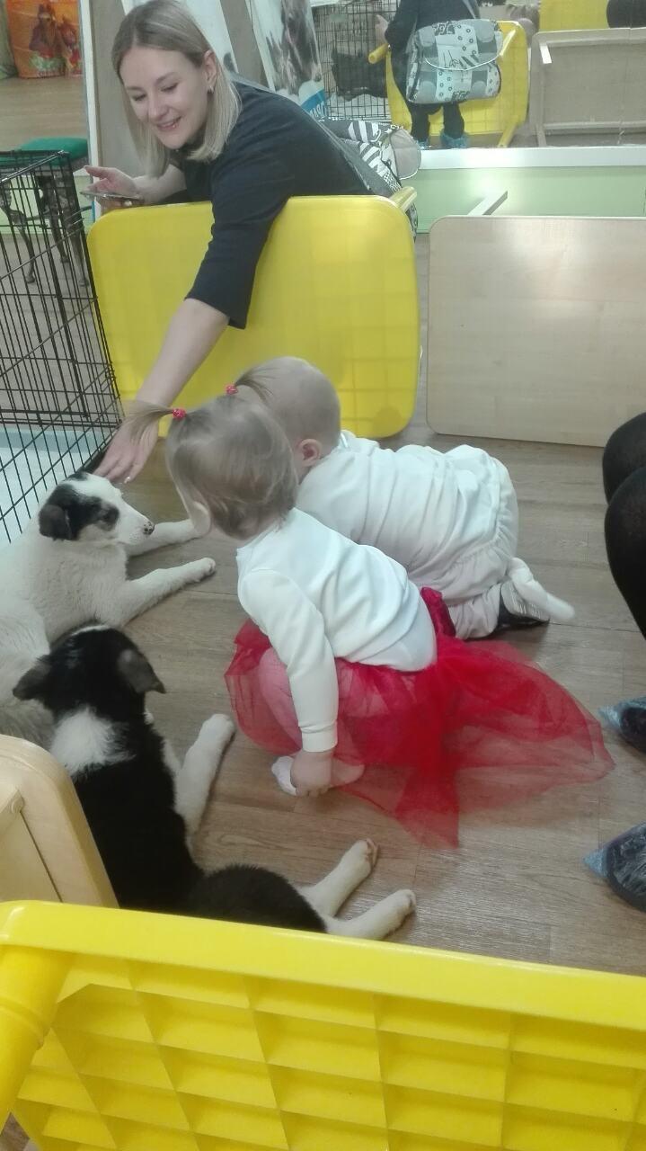 дети играют с собаками