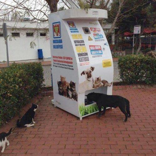 Автомат-кормушка. Стамбул, Собака, Кот, Бездомное животное, Забота