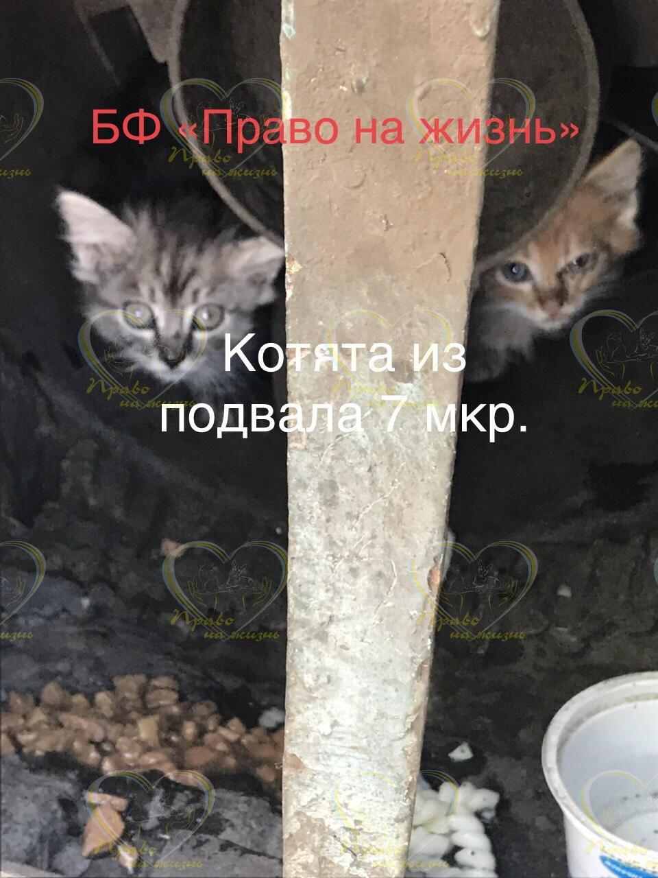 Заставка для - Сбор на котят с 7 микрорайона