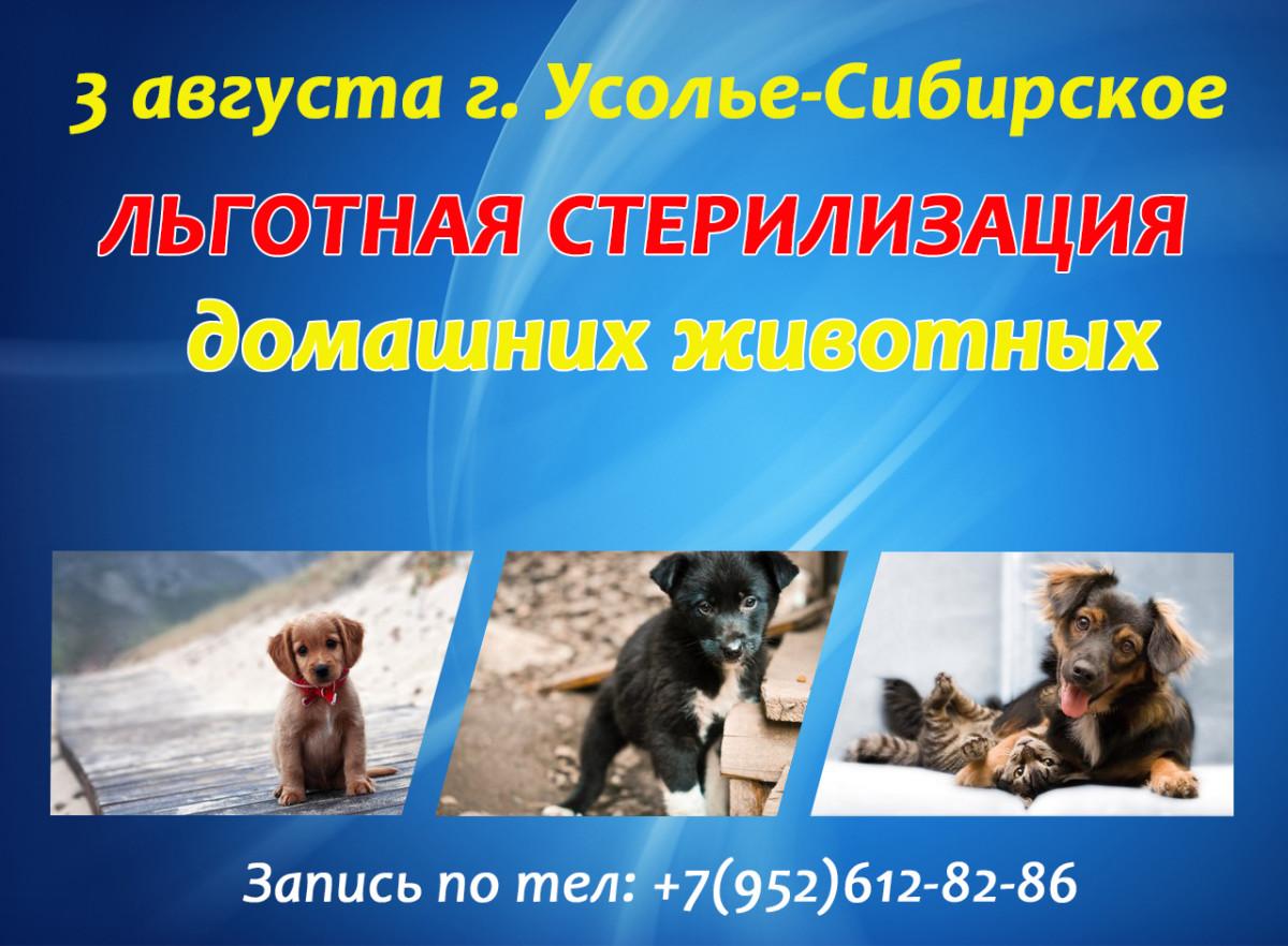3 августа льготная стерилизация г. Усолье-Сибирское