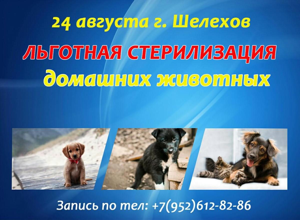24 августа льготная стерилизация в г. Шелехов