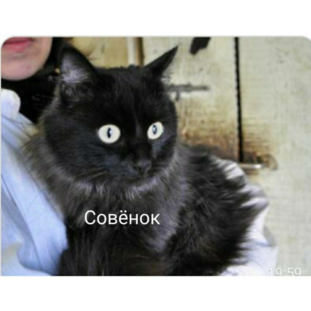 Кот Совенок