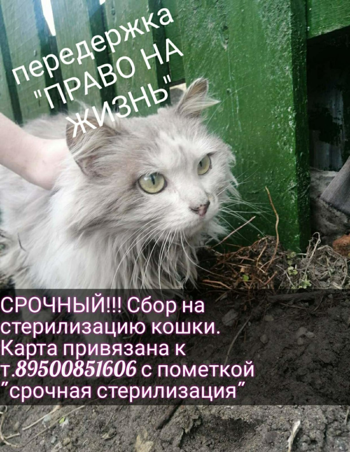Заставка для - Срочный сбор на стерилизацию беременной кошки