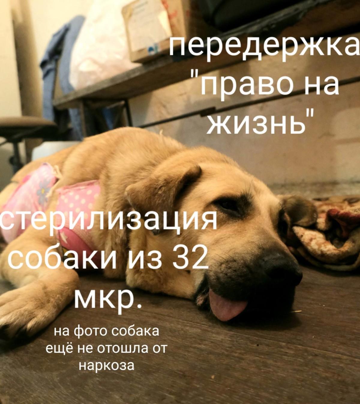 Заставка для - Срочный сбор на срочную стерилизацию собаки